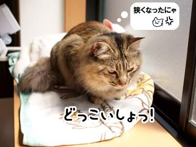 cat1809
