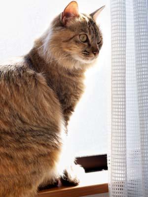 cat1813