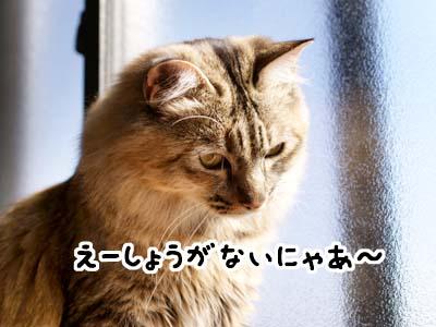 cat1815