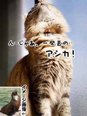 cat1816