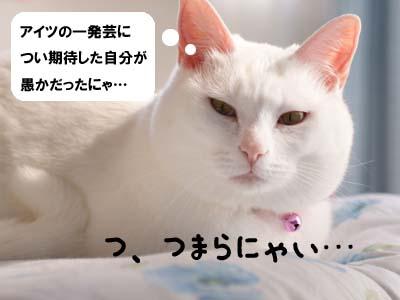 cat1817