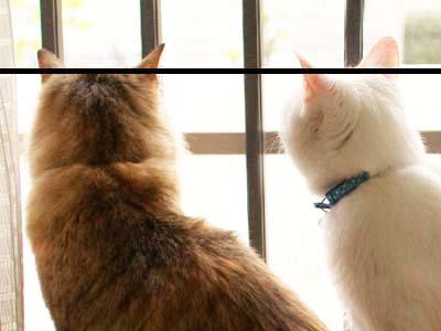 cat1829