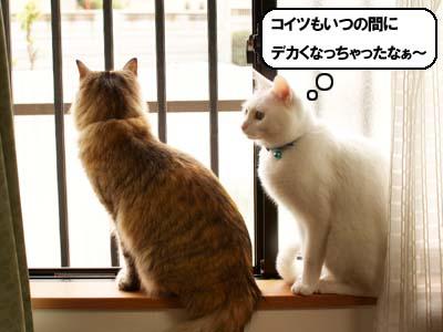cat1830
