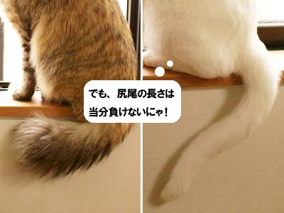 cat1831