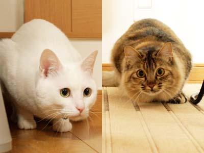 cat1833