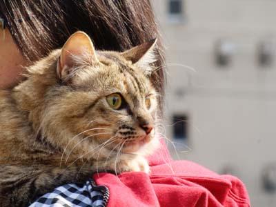cat1839