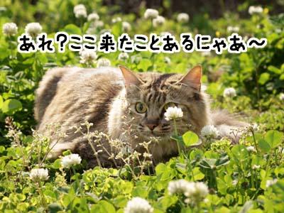 cat1840