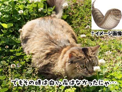cat1841