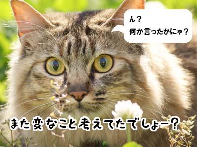 cat1842