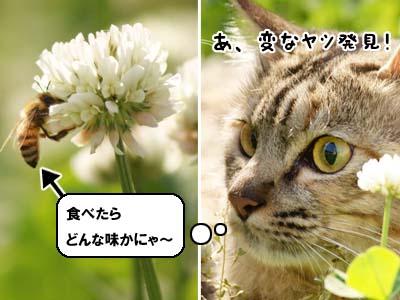 cat1843