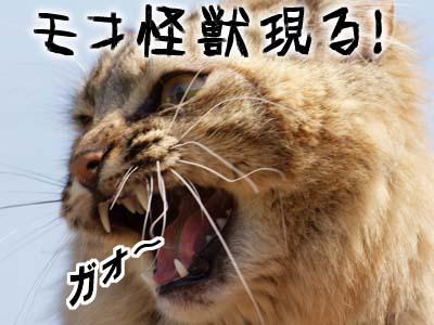 cat1844