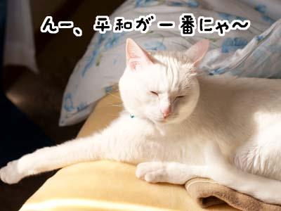 cat1845