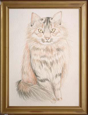 cat1847