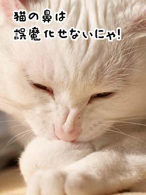 cat1855
