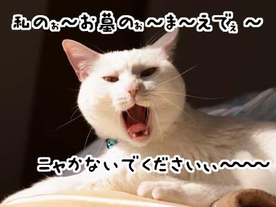 cat1858