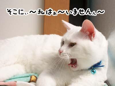 cat1859