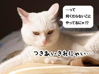 cat1862