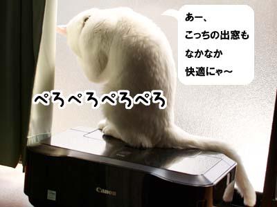 cat1863
