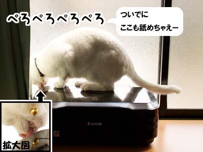 cat1864
