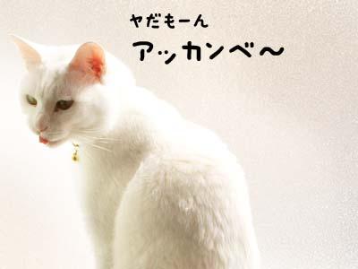 cat1865