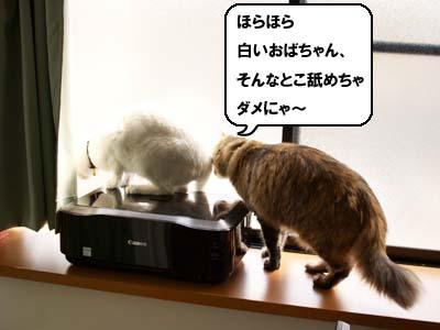 cat1866