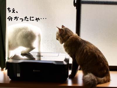 cat1867