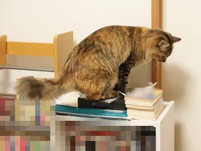 cat1869