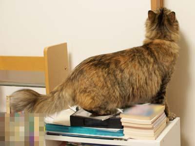 cat1870
