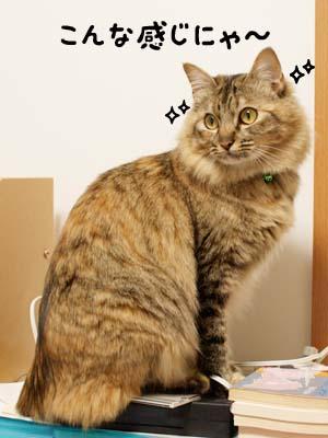 cat1873