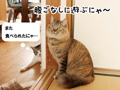 cat1876
