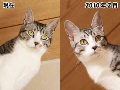 cat1879