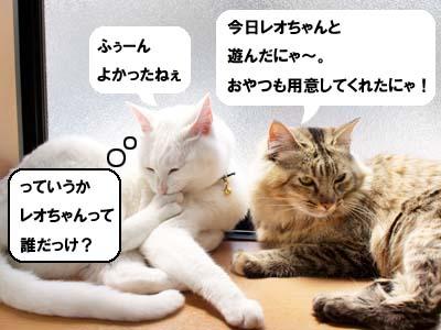 cat1880