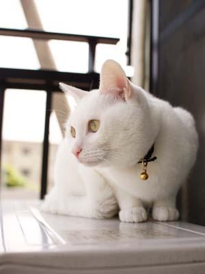 cat1881
