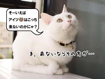 cat1882