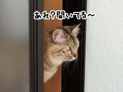 cat1883