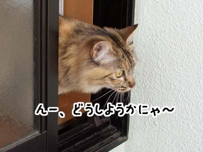 cat1884
