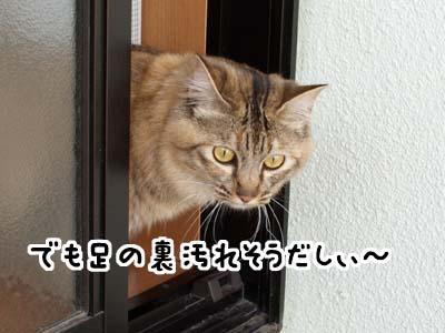 cat1885