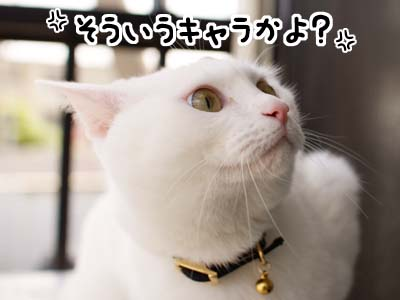 cat1886