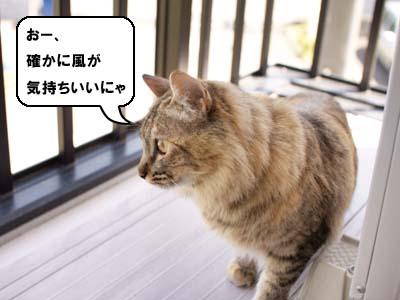 cat1887
