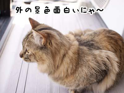 cat1888