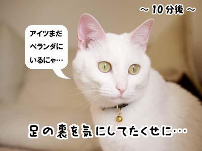 cat1889