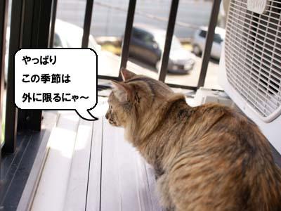 cat1890