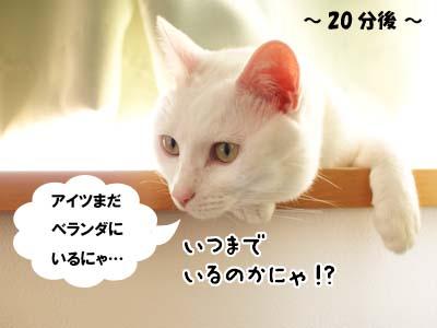 cat1891