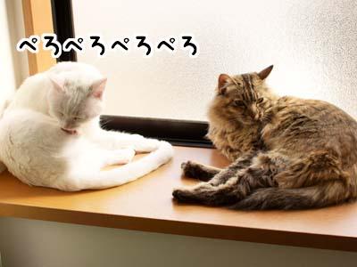 cat1892