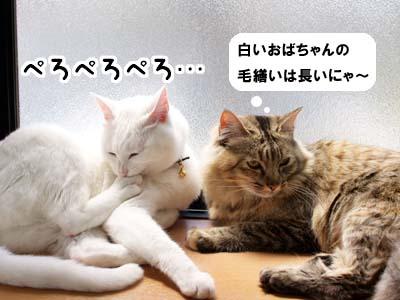cat1893