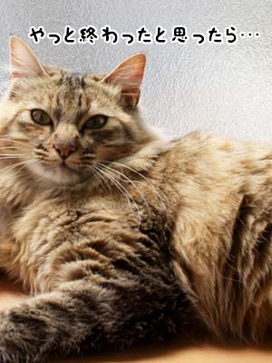 cat1894