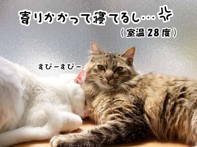 cat1895