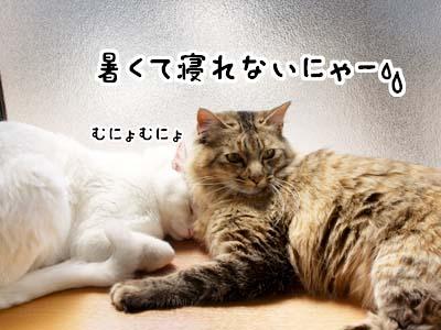 cat1896