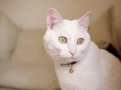 cat1899