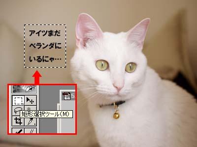 cat1905